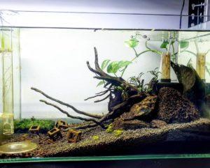 аквасойлы