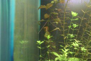 недостаток серы в аквариуме