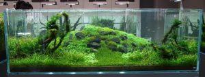 воздух для аквариума