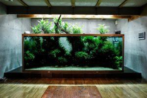 амано аквариум
