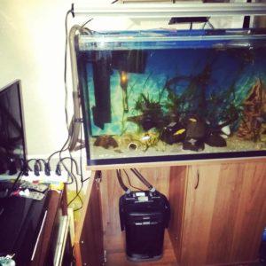 Фильтрация в растительном аквариуме