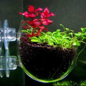 Горшочек на присосках для выращивания растений