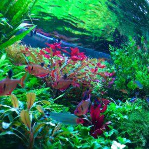 Топ-7 неприхотливых растений для новичков