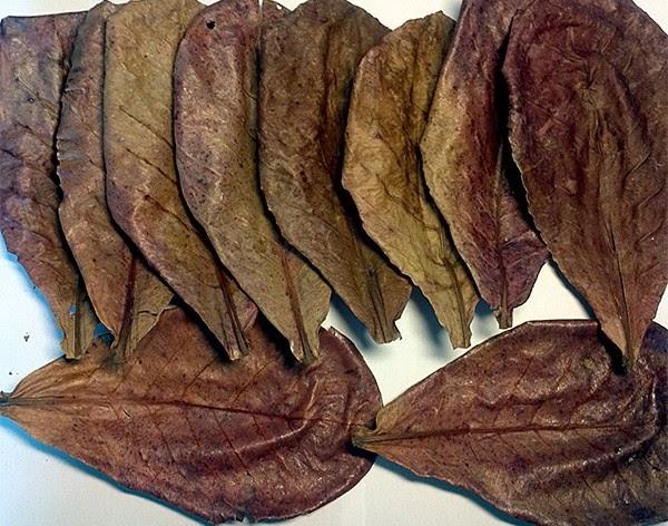 Измельченной листвы